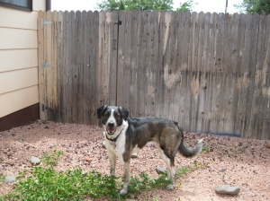Bongo and the Fence