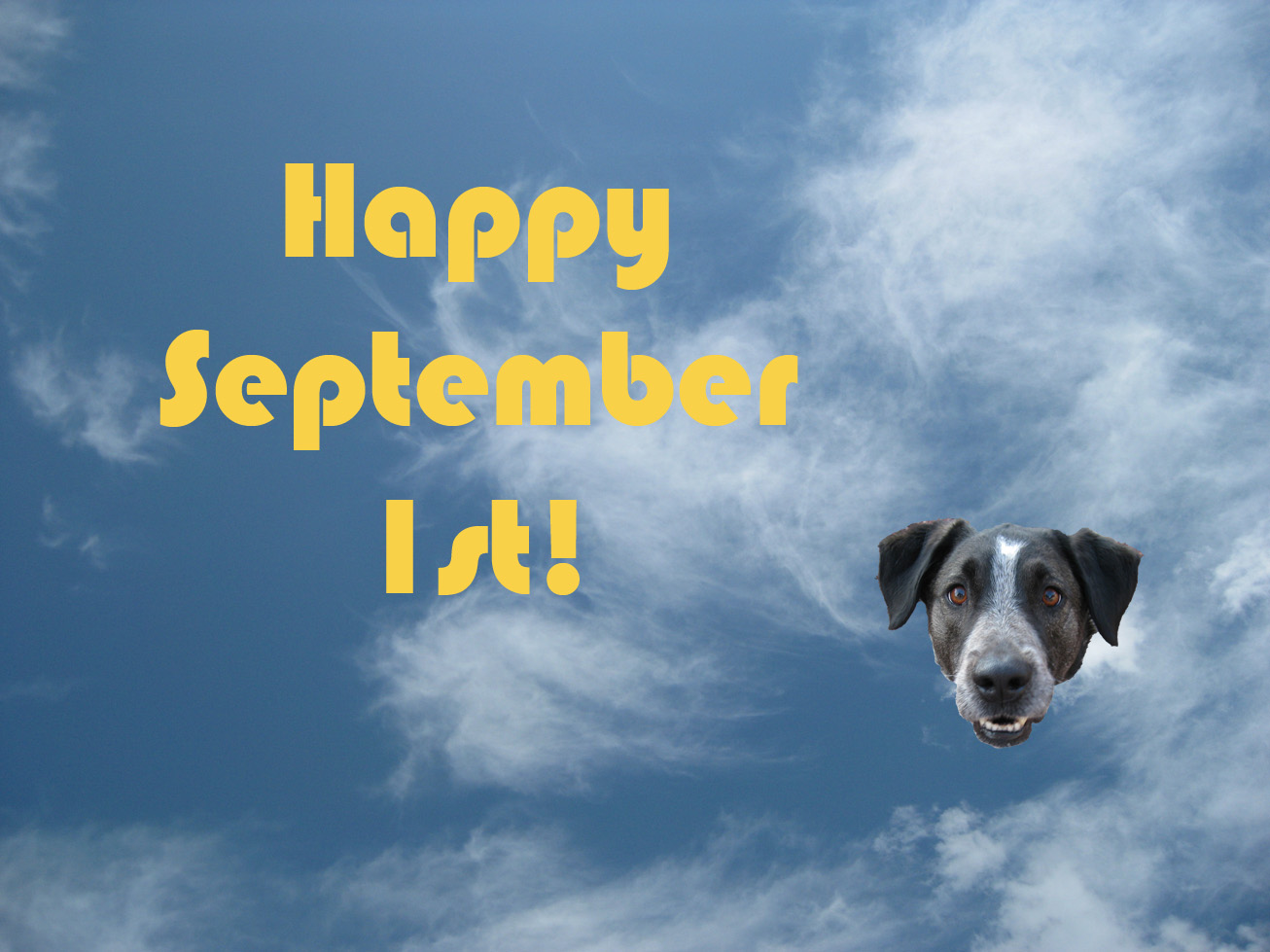 Happy September 1st | bongodogblog