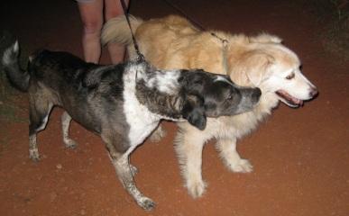 Bongo and Timmy