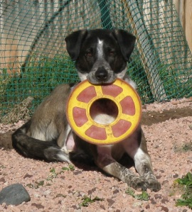 Bongo and his Frisbee