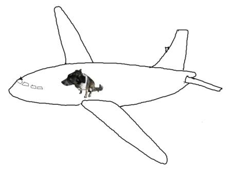 Bongo in a Jet