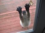 Pippa at the Door