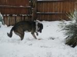 Bongo Snow 2