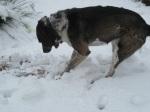 Bongo Snow 5