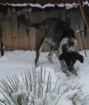Bongo Snow 8
