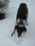 Bongo Snow 9