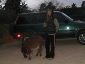 Miniature Horse and Person