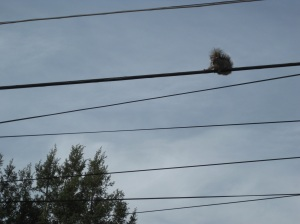 Squirrel high on a wire