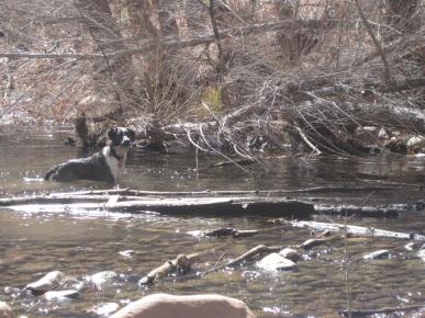 Bongo Crossing the Creek