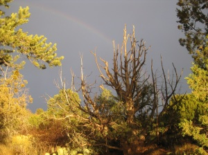 Rainbow behind dead tree