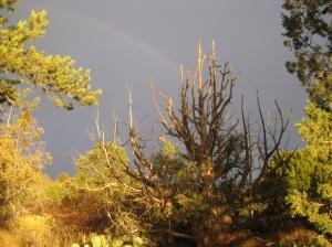 Rainbow behind dead tree
