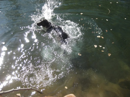 Bongo Getting One More Swim