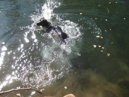 Bongo Getting One More Swim