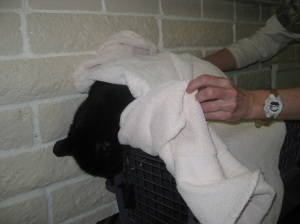 Scratchy Wrapped in a Towel
