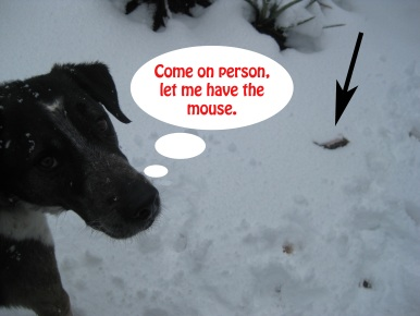 Bongo and Mouse in the Snow