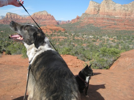Bongo and Pablo not looking at the scenery