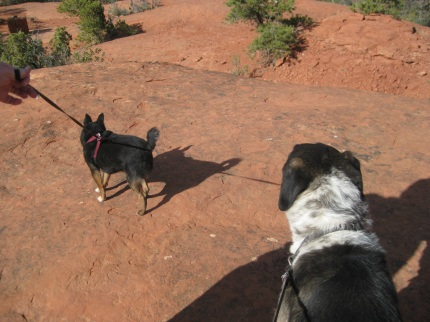 Pablo and Bongo on the Trail