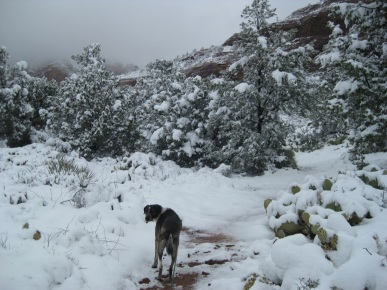 Bongo in the trail in the snow