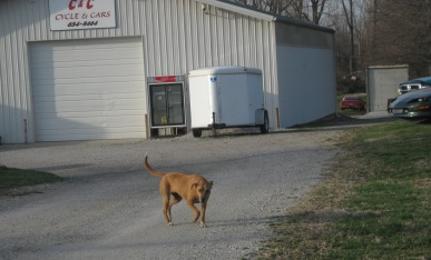 Junk Yard Dog