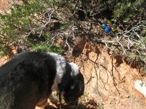 Bongo looking for the stash