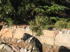 Bongo in front of neighbor's yard