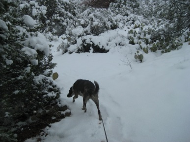 Bongo Sniffing in Snow