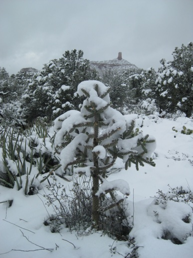 Cactus in Snow