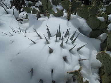 Spiny Snow Creature