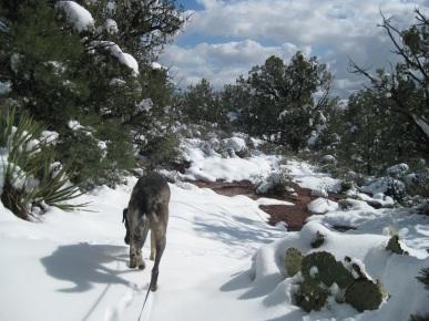 Bongo on virgin snow