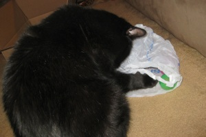 Scratchy checking out a bag