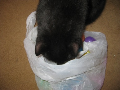 Scratchy getting into the bag