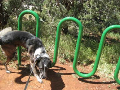 Bongo marking the bike rack