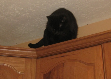 Scratchy on the cabinets