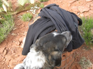 Bongo sniffing clothes on the trail