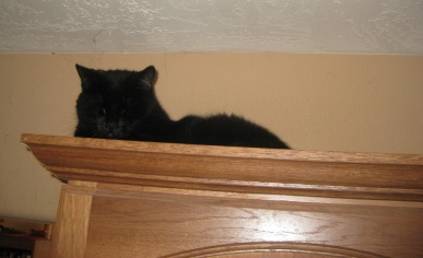 Scratchy on top of the cabinet