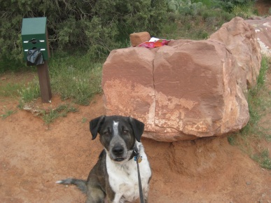 Bongo in front of the Lost and Found Rock