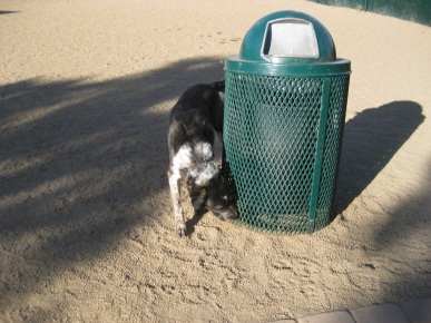 Bongo Sniffing a Garbage Can