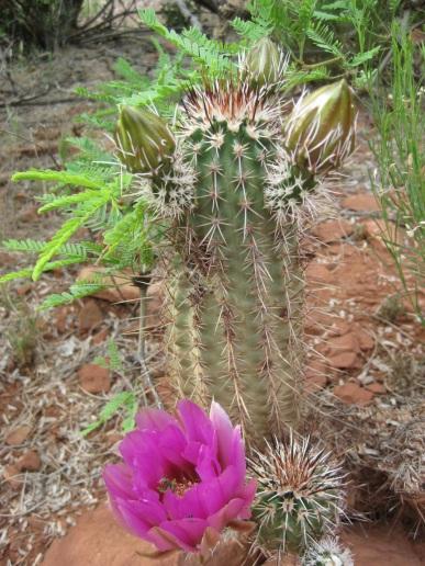 Transformer Cactus