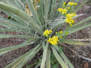 Yucca with Yellow Flowers