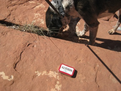 Altoids on a rock and Bongo's nose in a crack in the rock