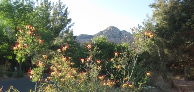 Bird of Paradise with Thunder Mountain in the background