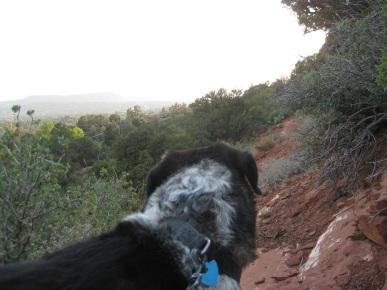 Bongo Looking at the Smoke
