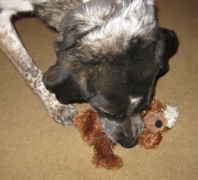 Bongo and Squeaky Bear