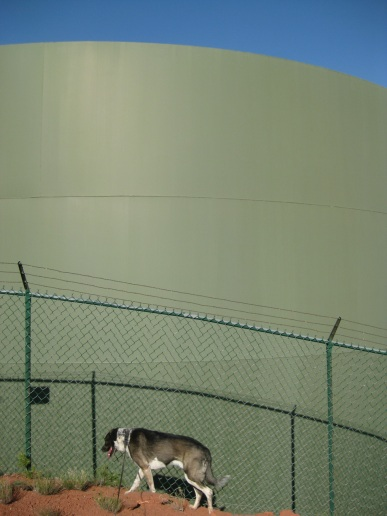 Bongo in front of the water tank