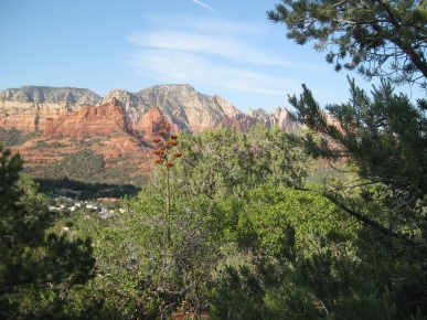 Century Plant and Red Rocks