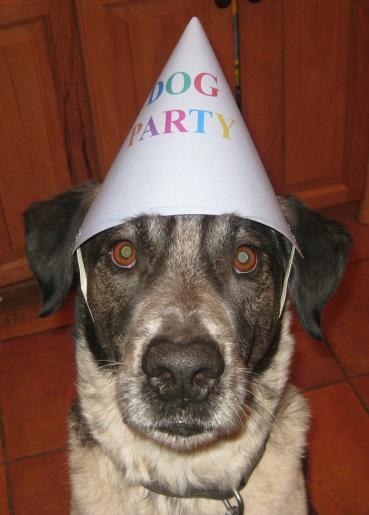 Bongo with Dog Party Hat