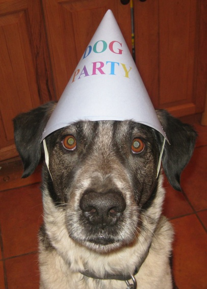 Bongo with Dog Party Hat