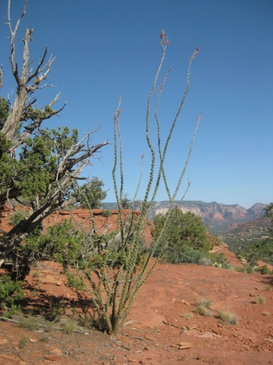 Ocotillo and Mogollon Rim
