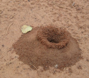 Ant hill shaped like a vase