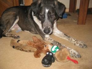 Bongo with squeaky toys